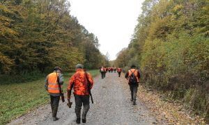 INZ-ovi savjeti lovcima – najčešće bolesti divljači
